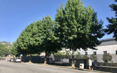 Ciclovias ou árvores? A escolha que não pode acontecer